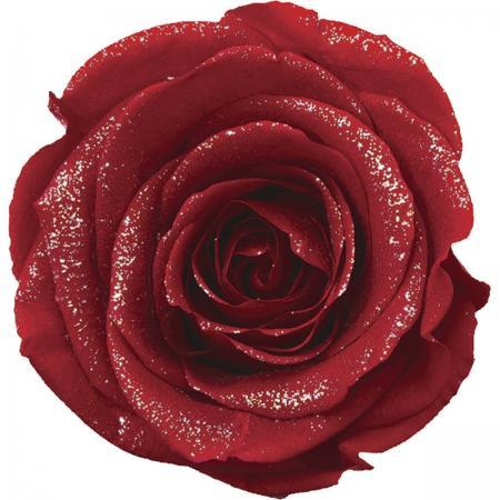 赤色バラ・カーネ