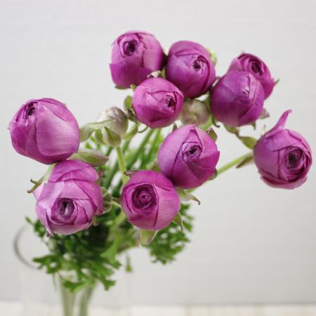 ラナンキュラス 藤てまり(うす紫)