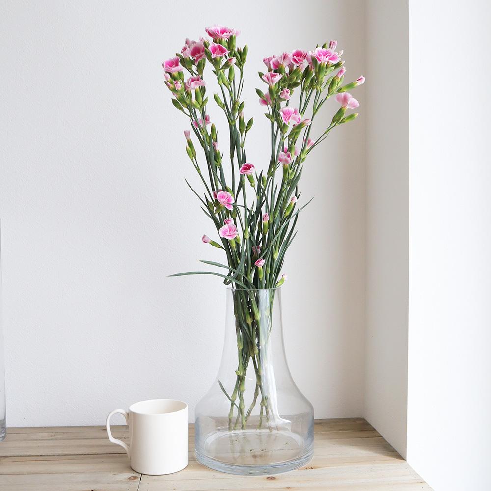 【生花】ダイアンサス ソネットフレーズ(25本単位)ピンク×白