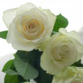 【生花】バラおまかせ 白