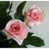 【生花】バラおまかせ 淡いピンク